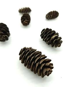 Pine cones - set of 4