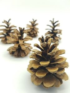 Medium pine cones - set of 2